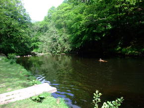 swim-fingle -
